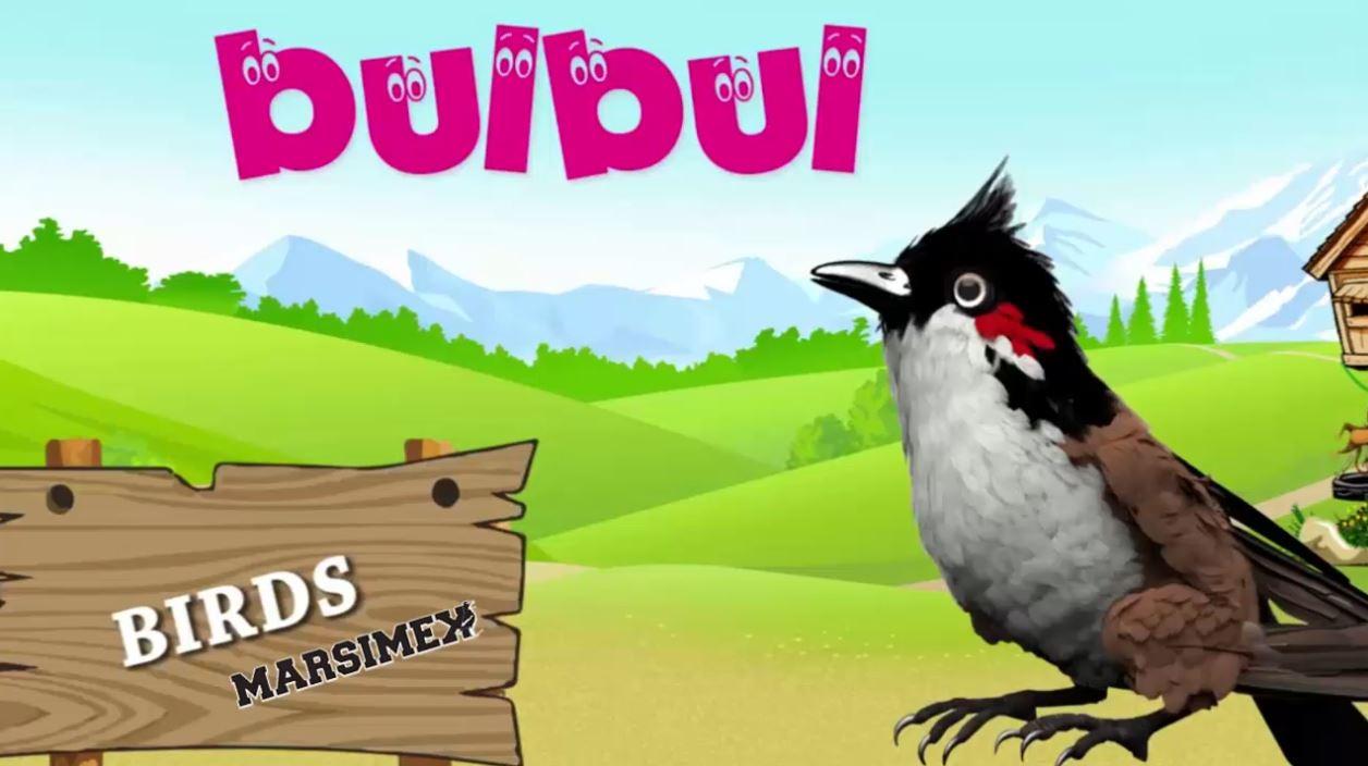 معرفی نام پرندگان به لاتین